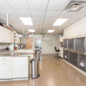 General Work Area and kennels at Jefferson Veterinary Hospital